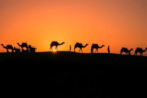 PSA HM Ribbons - Yiliang Yang (China) <br /> Camel Team3