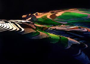 PSA HM Ribbons - Tong Hu (China) <br /> Beautiful Fieids