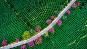PhotoVivo Gold Medal - Chaoyang Cai (China)  Alishan Scenery