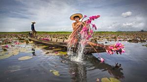 PSA HM Ribbons - Tan Tong Toon (Malaysia)  Water Lily Farmer