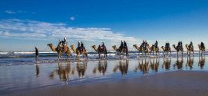 EGIPC Merit Award - Yanping Qiu (Hong Kong)  Camel Team