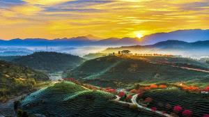 PhotoVivo Honor Mention - Yanping Qiu (Hong Kong) <br /> Tea House Morning