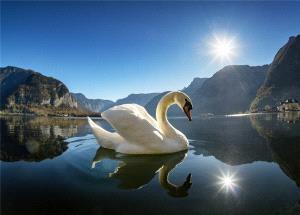 EGIPC Merit Award - Chen Chong (China) <br /> Swan Lake
