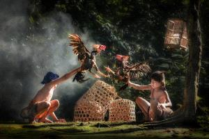 PhotoVivo Honor Mention - Kristanto Lie (Indonesia)  Rooster Final Fight