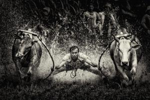 EGIPC Silver Medal - Liak Song Teo (Malaysia)  Race Bulls
