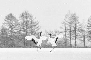 EGIPC Merit Award - Alexey Suloev (Russian Federation)  White Dance Of The Cranes