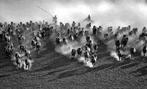 EGIPC Merit Award - Zee Kek Heng (Singapore)  Horses In Dust Shades