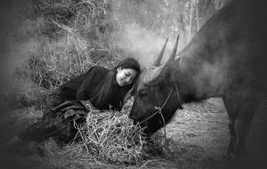 PhotoVivo Honor Mention - Pat Choo (Singapore) <br /> Leaning On The Buffalo