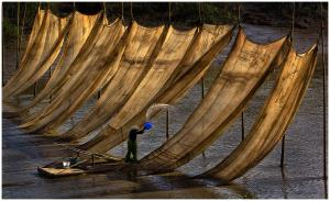 EGIPC Merit Award - Thomas Lang (USA)  Washing Fishing Nets