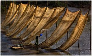 EGIPC Silver Medal - Thomas Lang (USA) <br /> Washing Fishing Nets