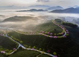 EGIPC Gold Medal - Shimin Wang (China)  The Morning Light Of The Tea Garden