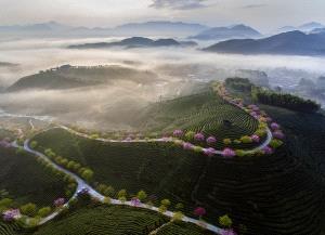 EGIPC Gold Medal - Shimin Wang (China) <br /> The Morning Light Of The Tea Garden