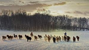 EGIPC Merit Award - Yongming Liu (China)  Galloping In Snowfield
