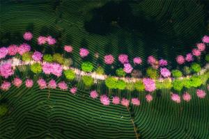EGIPC Merit Award - Bin Yu (China)  A Garden Full Of The Spring